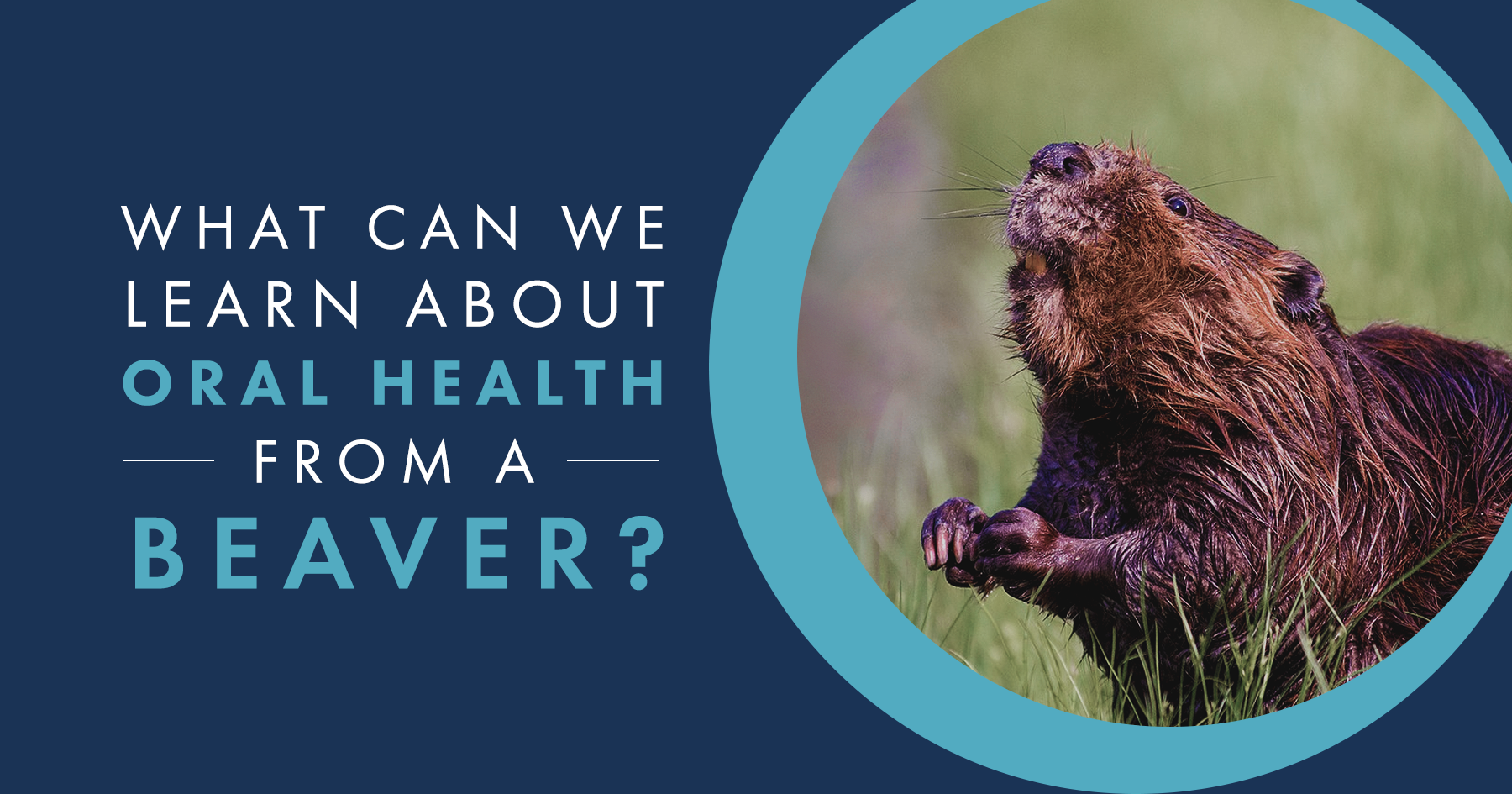 Beaver Enamel: What Can We Learn?
